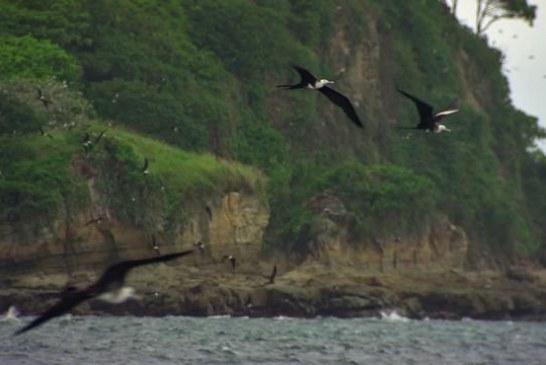 Panama Natural Video Scenery
