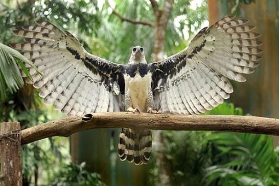 Panama National Parks